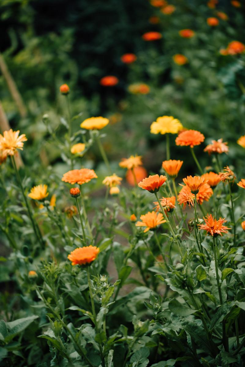 Garten Sommer 2015_Hochformat 0016