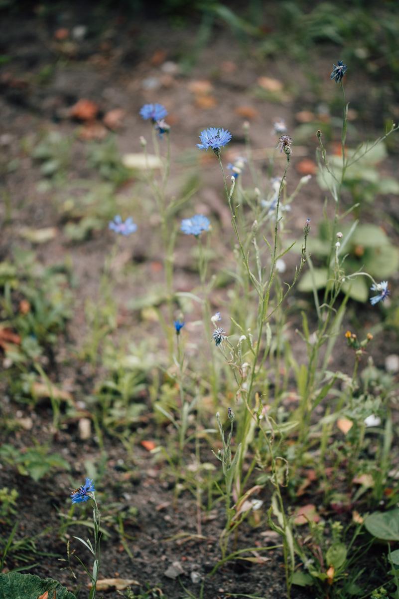 Garten Sommer 2015_Hochformat 0020