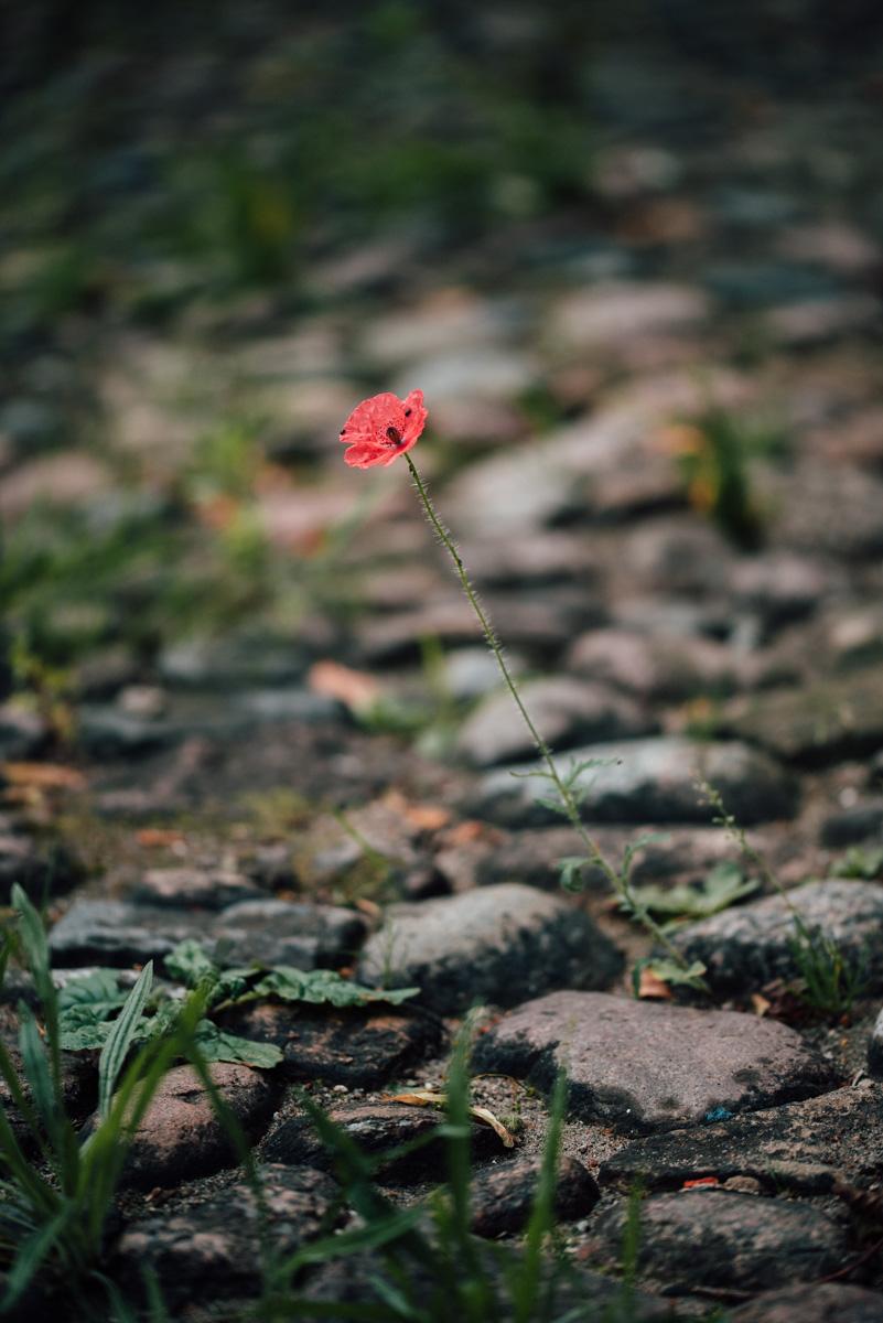 Garten Sommer 2015_Hochformat 0021