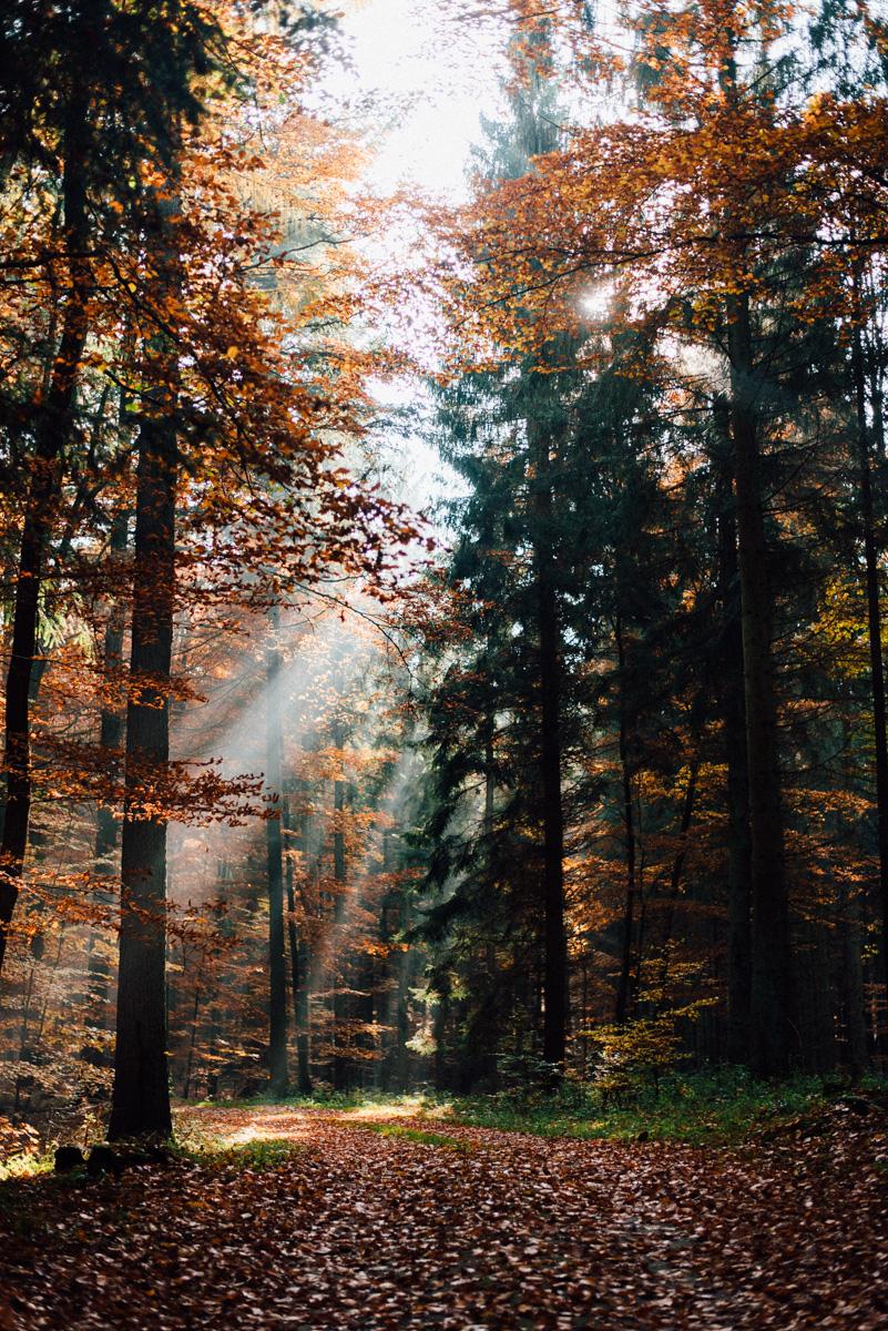 Herbstwald 0001