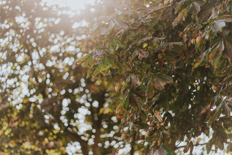 Herbstliche Bowl mit grünem Hokkaido