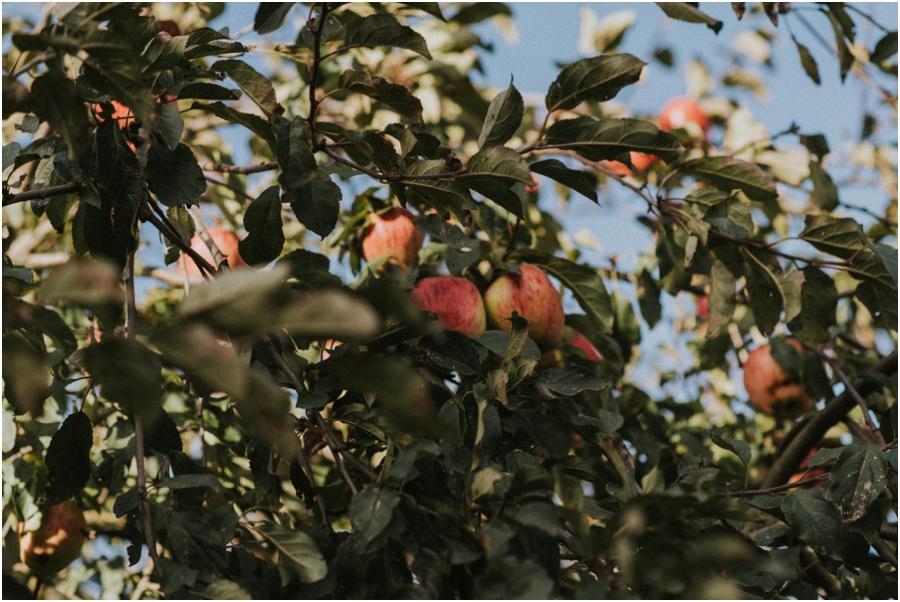 veganer Apfelkuchen - Apfelbaum