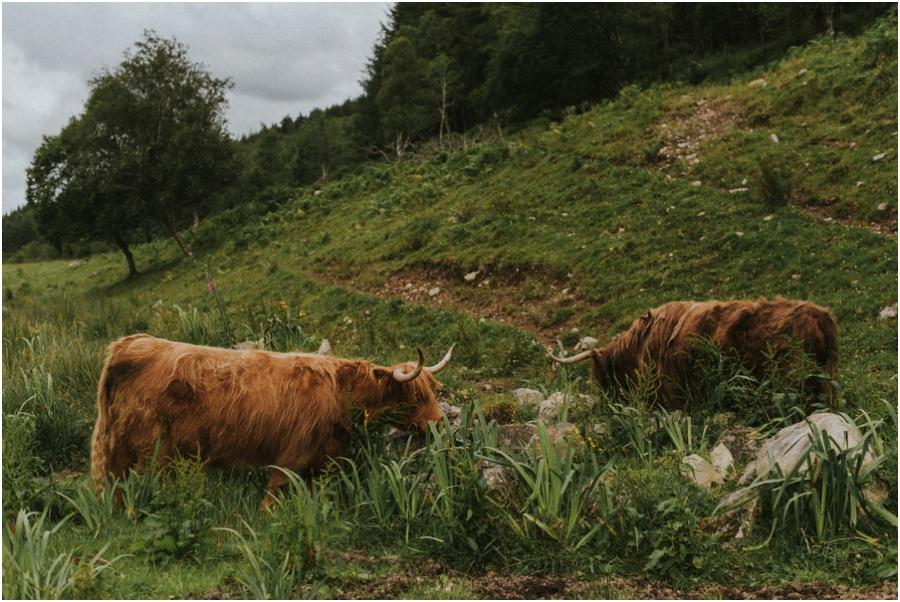 Loch Ness und die Highlands - schottisches Hochlandrind