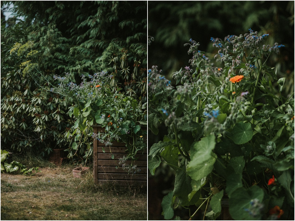 Sommer in meinem Garten