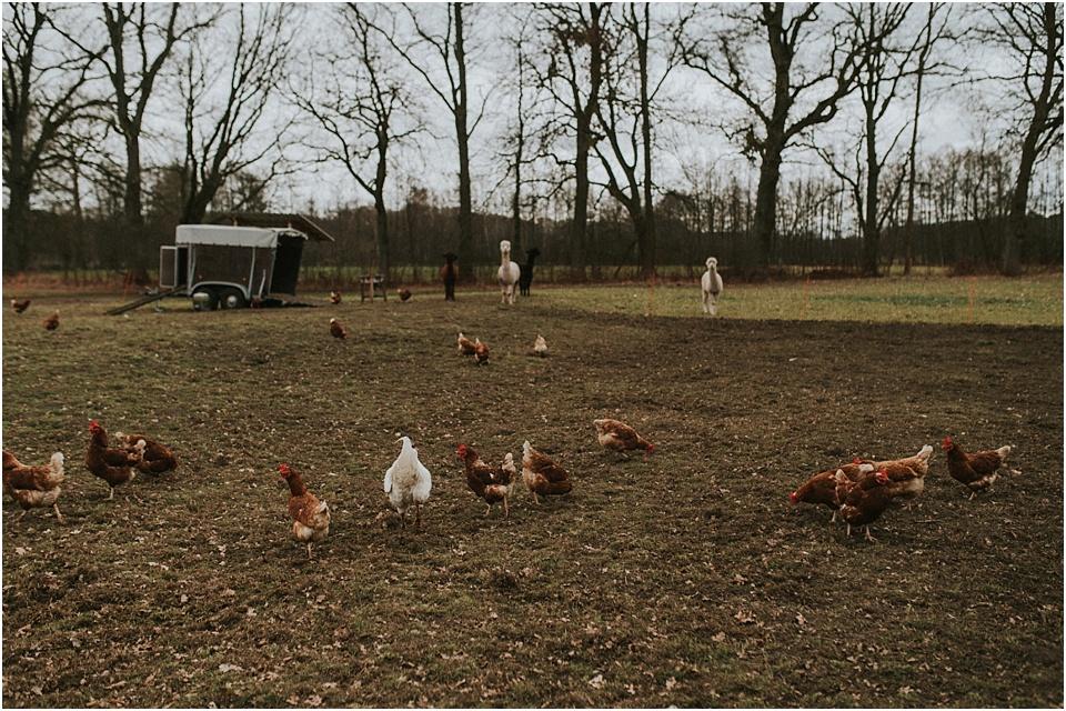 Das Biohotel Kenners Landlust im Wendland | Die Hühner der Familie Dreyer