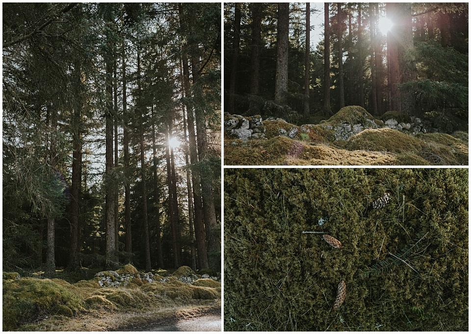 Schottland, meine große Liebe | mystische Wälder
