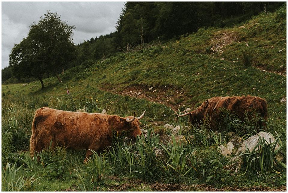 Schottland, meine große Liebe | Highlandrinder