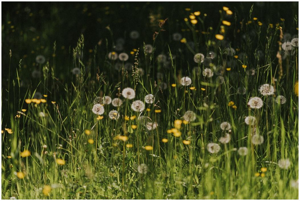 Artenvielfalt | Wie wir unser Artenvielfalt schützen können