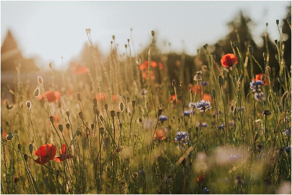 10 Tipps für einen nachhaltigen und umweltfreundlichen Garten - Blumenwiese
