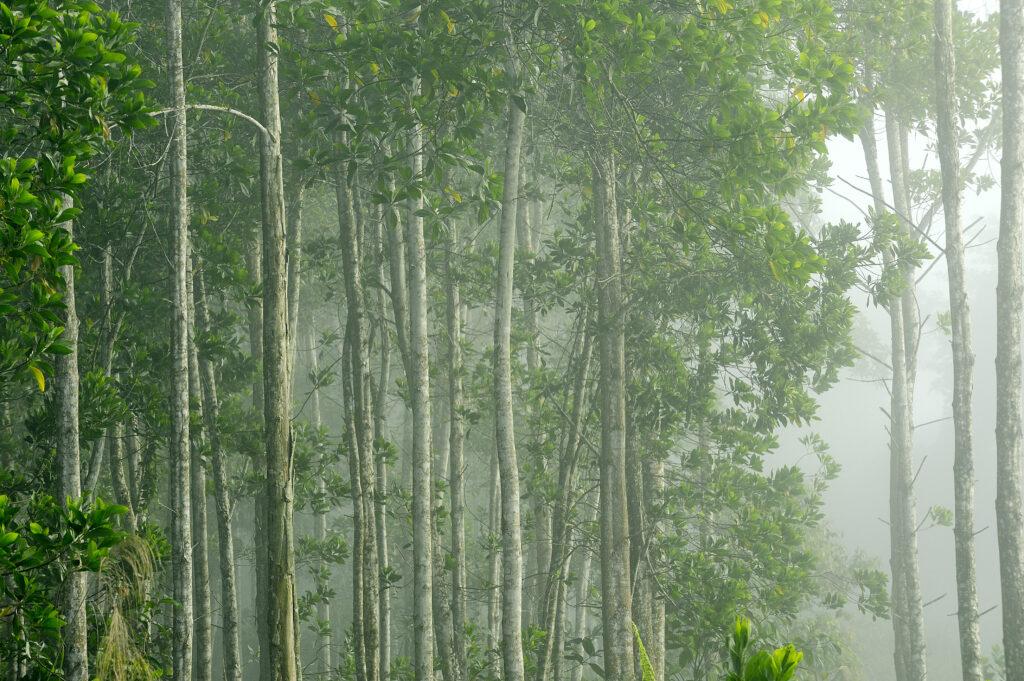 Kompensation fürs Klima